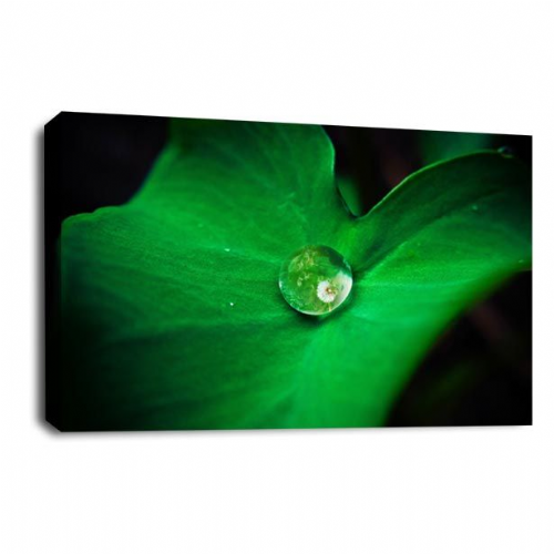 Floral Flower Wall Art Large Leaf Water Drop Picture Print